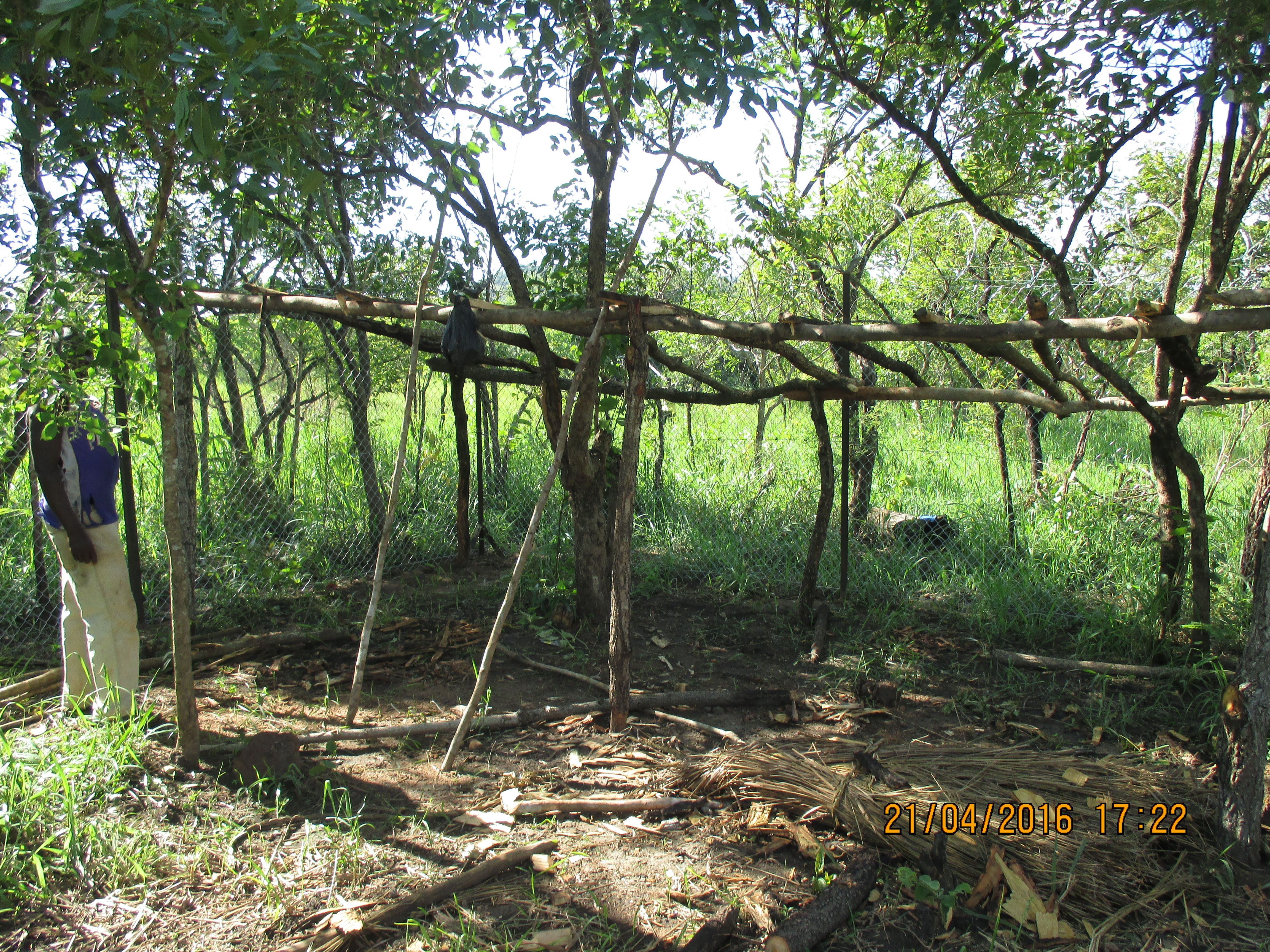 Constructing a shelter to provide plenty of shade and protection from rain.