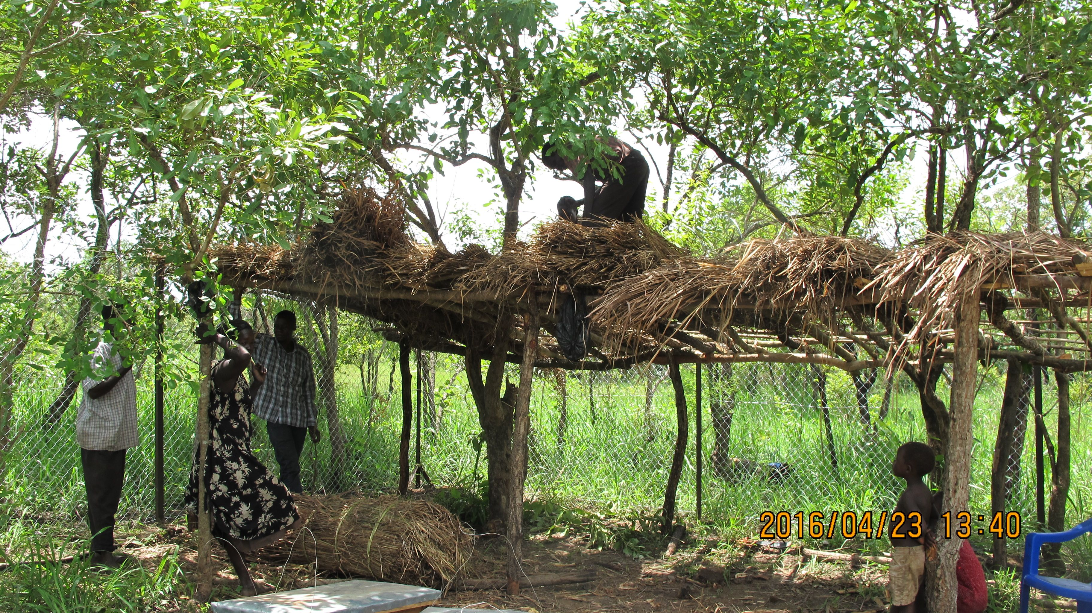 A natural thatch roof provides a cool and protecting roof.