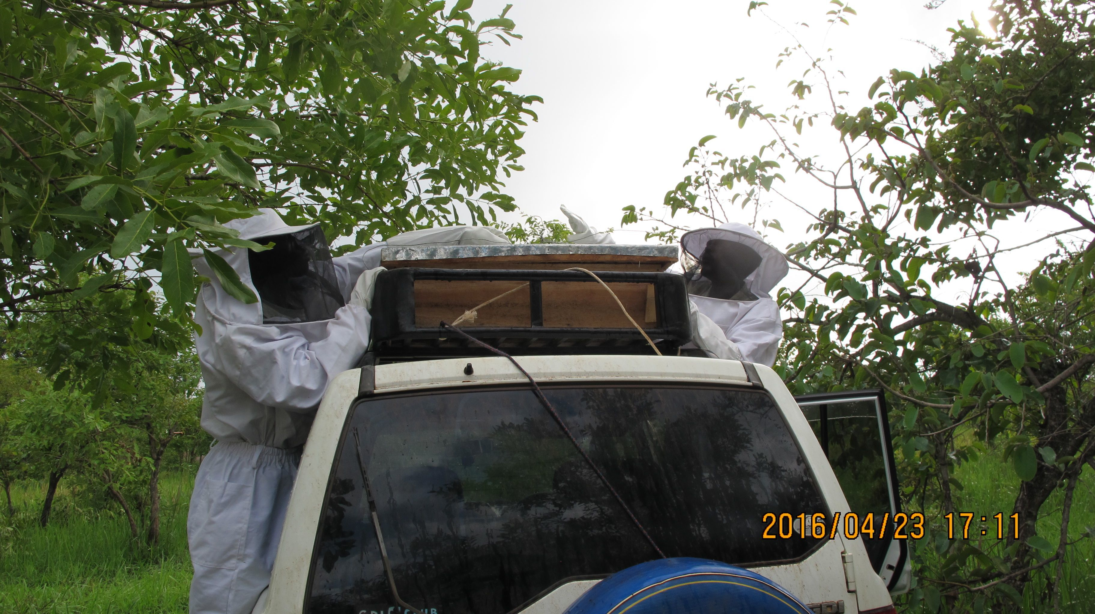 This was our live hive. Unfortunately, the bees absconded shortly after the hive was placed in the Apiary.