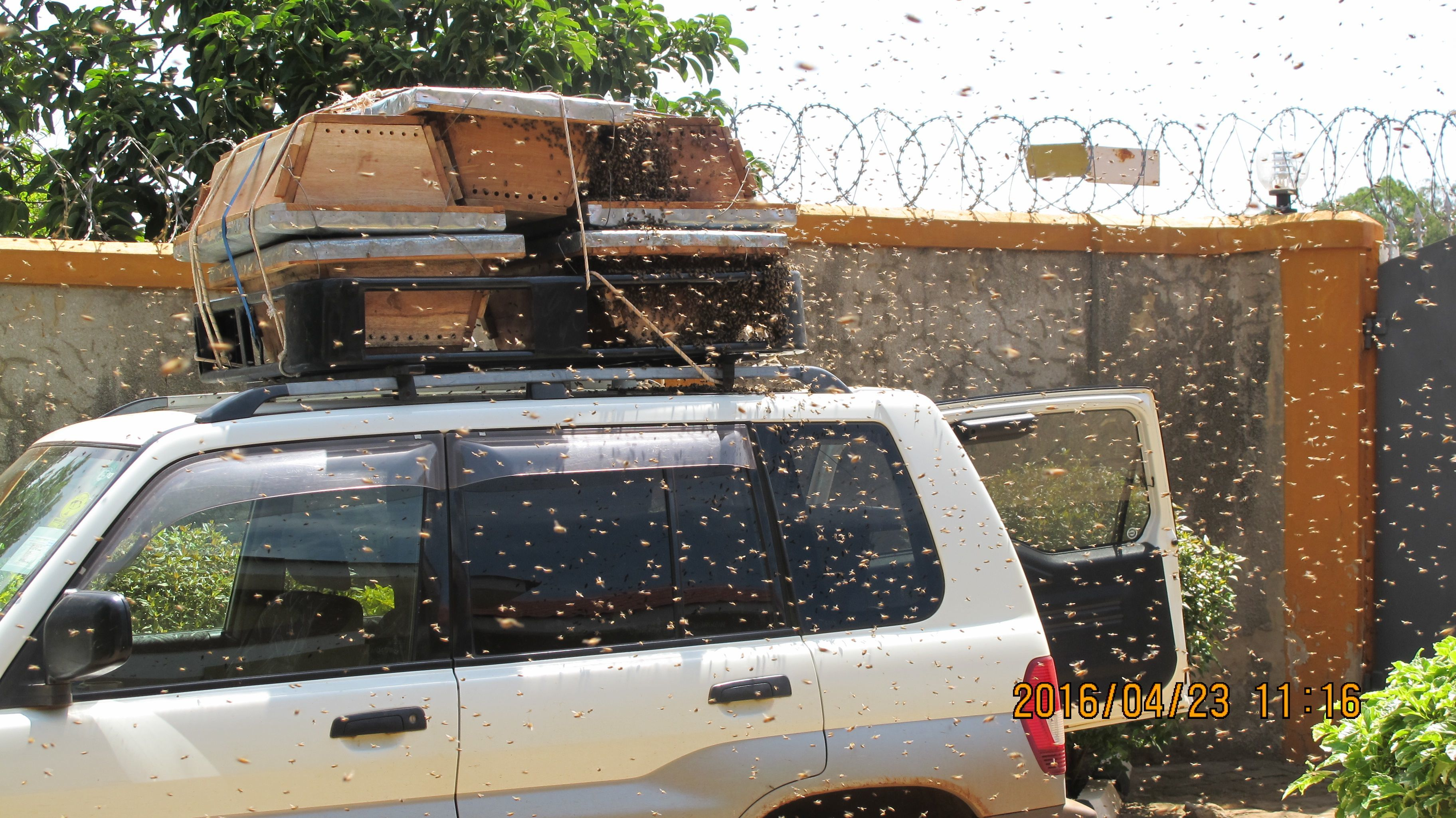 KTB hives loaded on car and ready for the village. We actually had a swarm of bees colonize a hive while we were packing for the village.